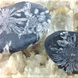 Flat Stones Chrysanthemum Flat Stone